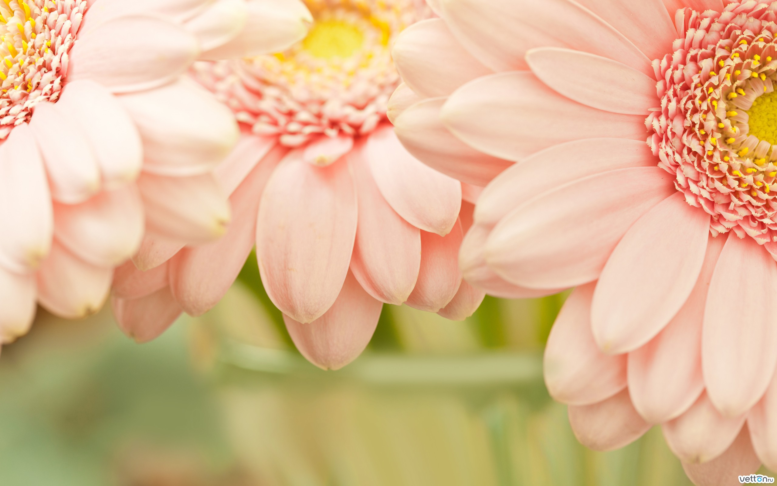 обои на рабочий стол wallpapers цветы № 644843 бесплатно