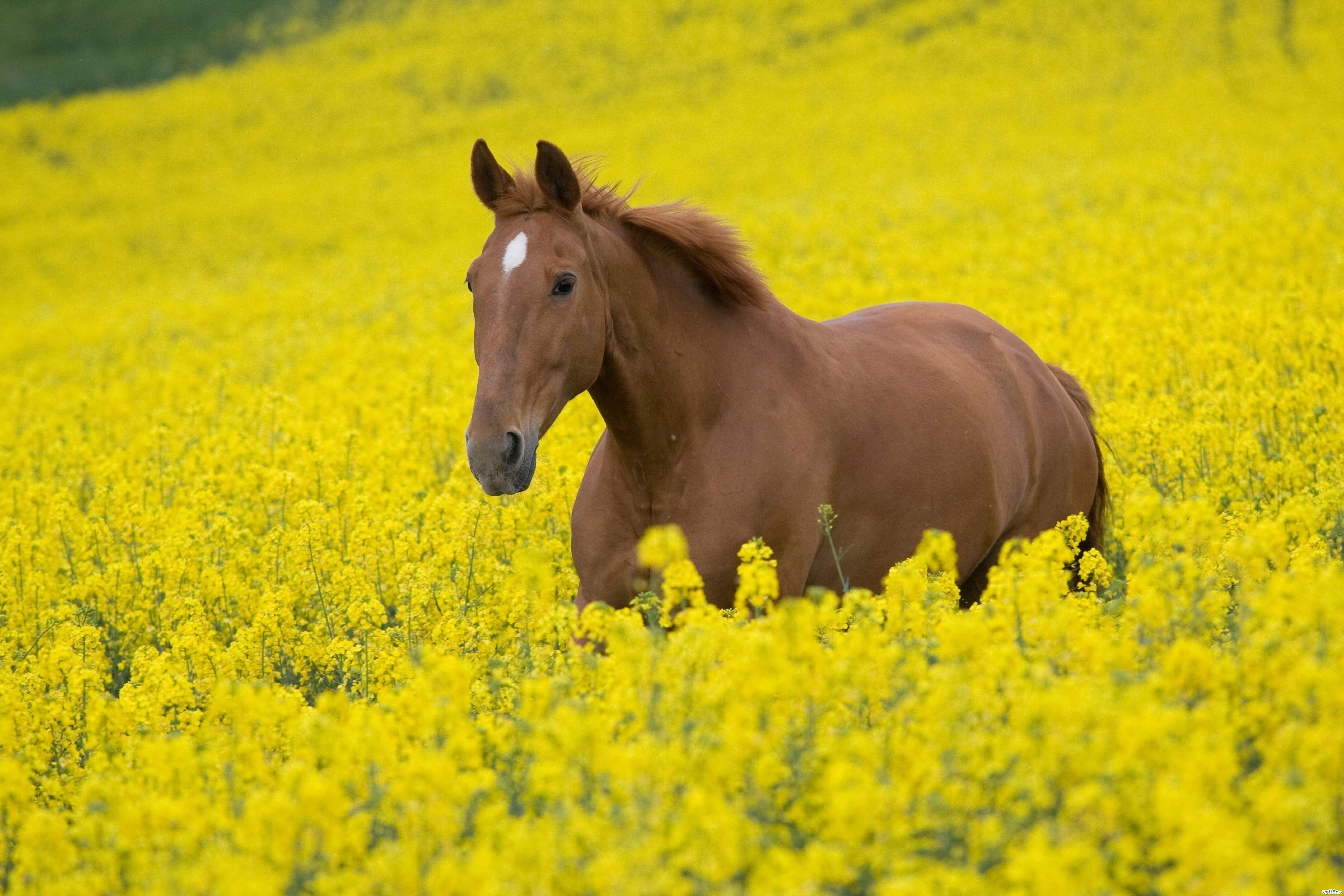 Животные фото лошади 2