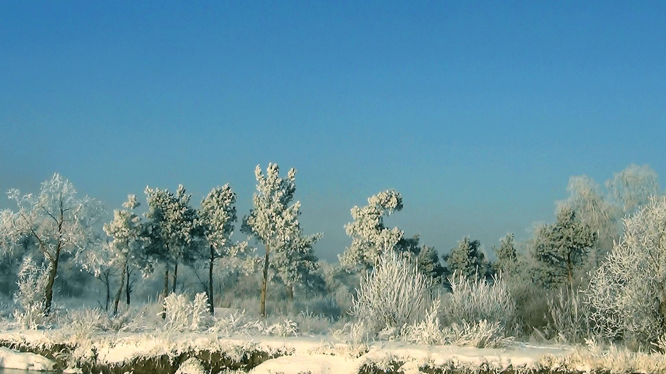 Обои зима сказочный лес 4