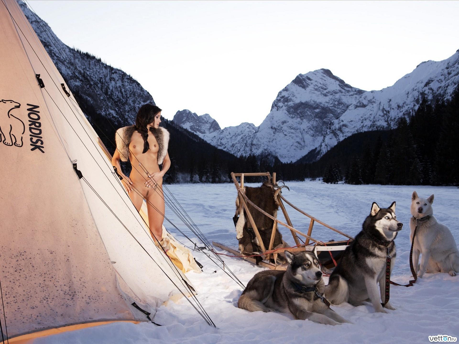 Картинки, голое тело, снег, горы, мех, собаки,454009 обои, рисунки
